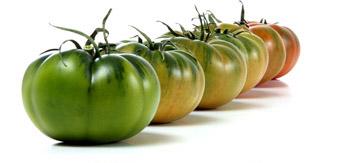 tomate soloraf