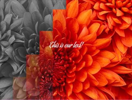 1-plugin-wordpress-efectos-imagenes