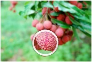 2-plugin-wordpress-efectos-imagenes